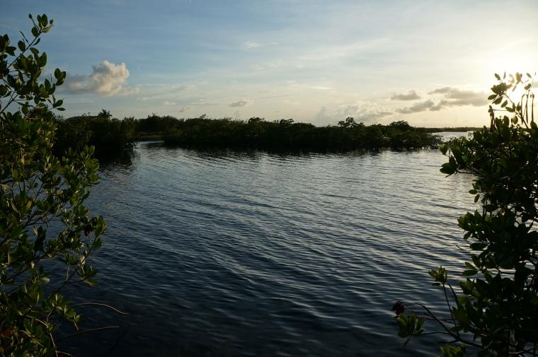 Geiger Key Mangroves 2